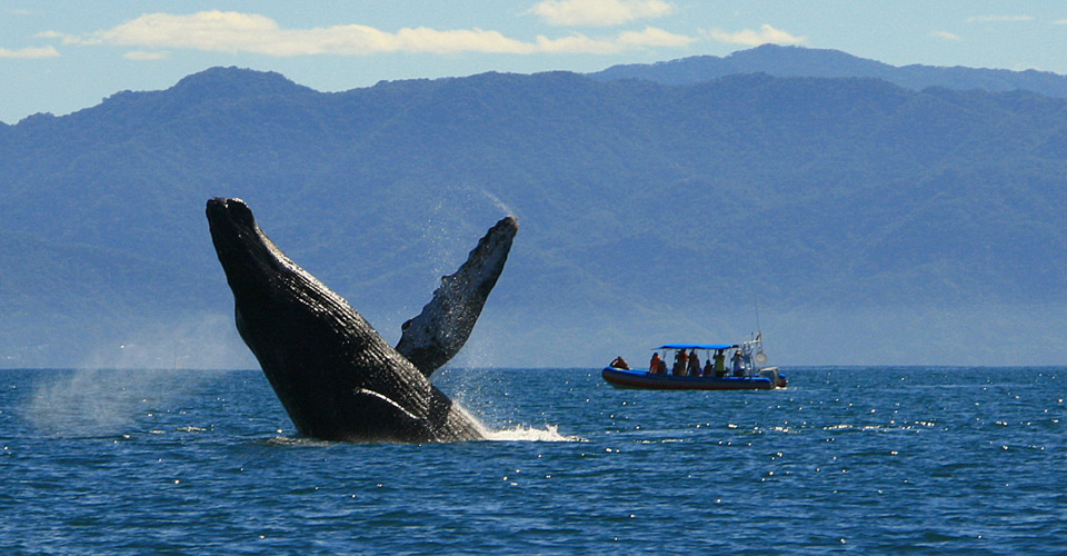 Humpback-Whale-Watching-Ext-MAIN