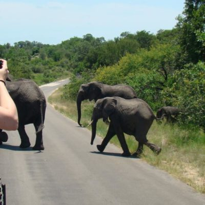 Want To Learn More About South Africa Tours Or Motorcycle Tours In Thailand?