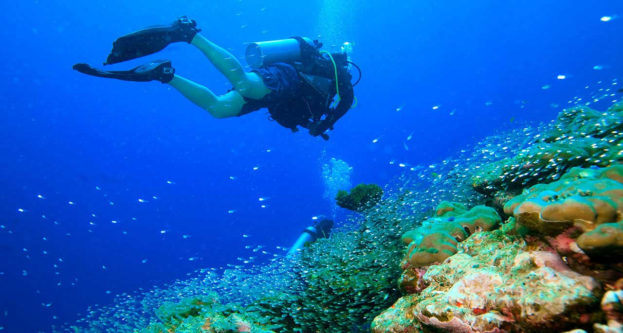 Best Scuba Diving Spots In Thailand – Let's Check Them Out!!